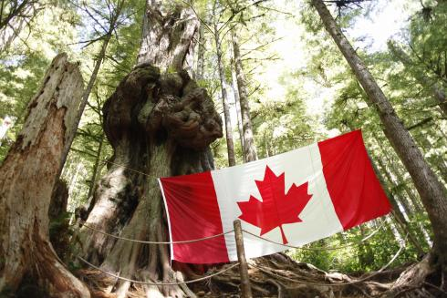 Flag#8-GnarleyCedar-AvatarGrove